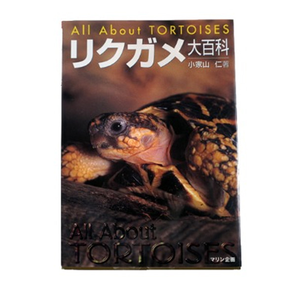 All about Tortoise